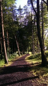 Brabazon woods walk in Swinford